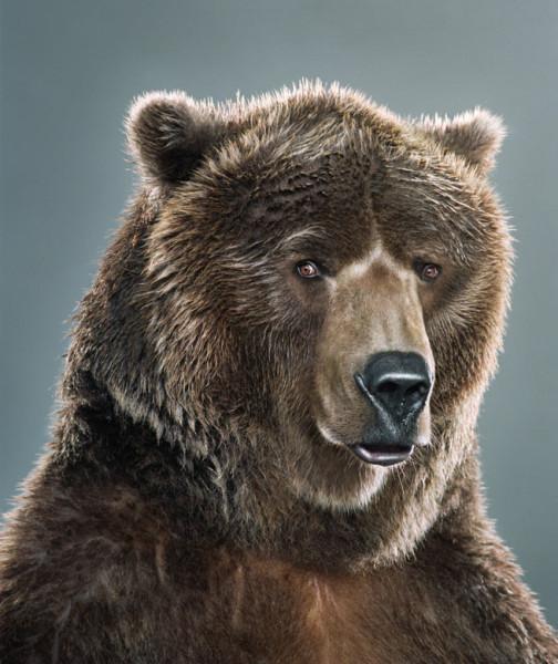 portrety-medvedey-2