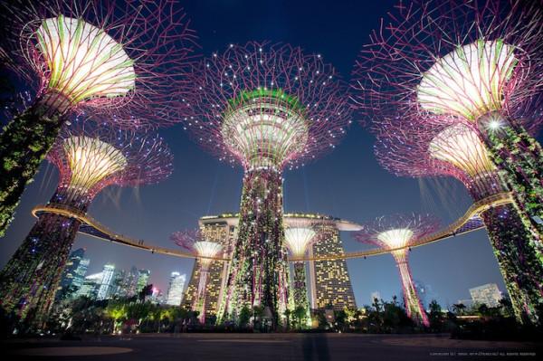 superderevya-v-singapure-1