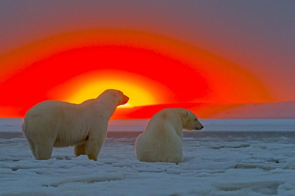 bearsnsunset01