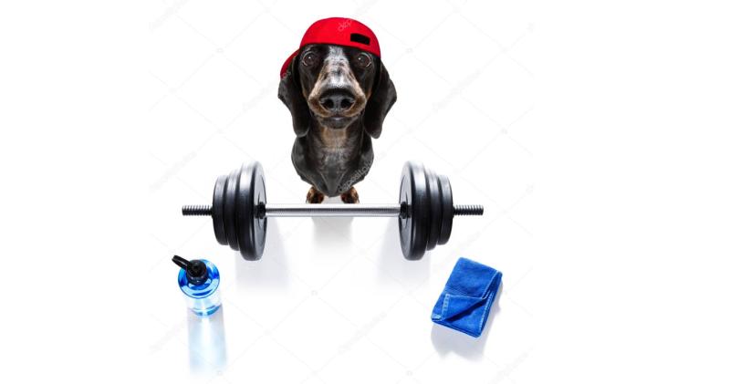 Разные животные приходят в фитнес с разными задачами