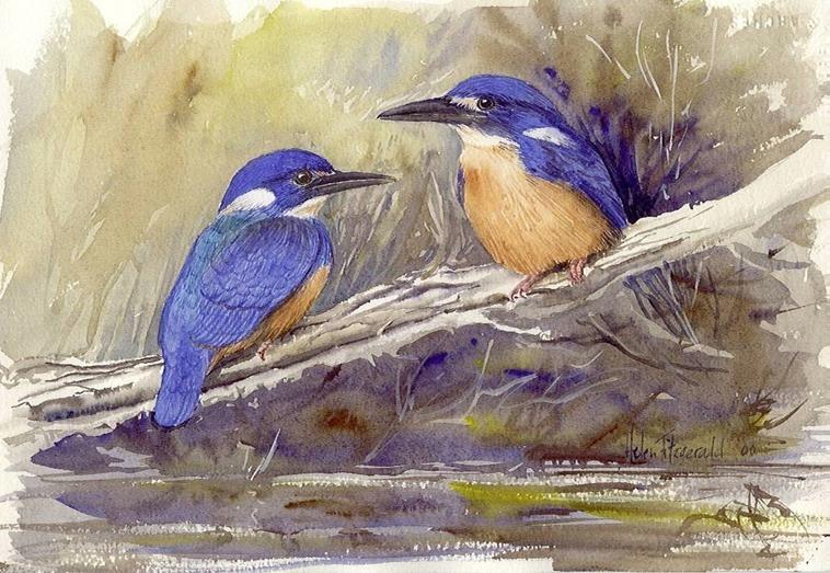 azure-kingfishers-b15_med