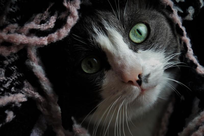Котик просто для настроения :)