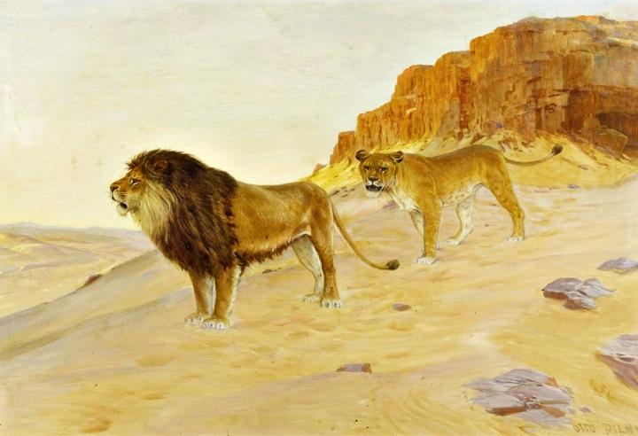Пара львов в пустыне перед красными скалами.