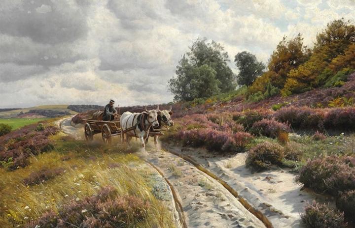 Пейзаж в Ютландии с покрытыми вереском холмами