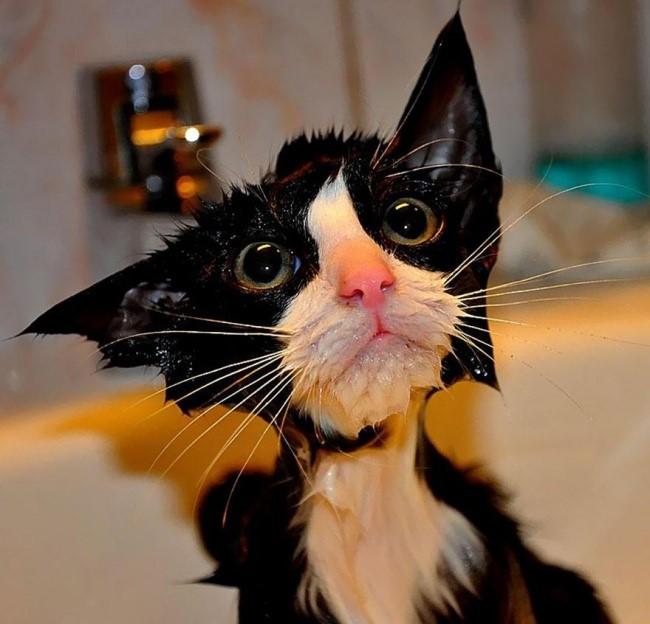 Мокрые коты