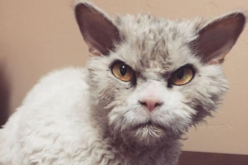 Не троньте кошек