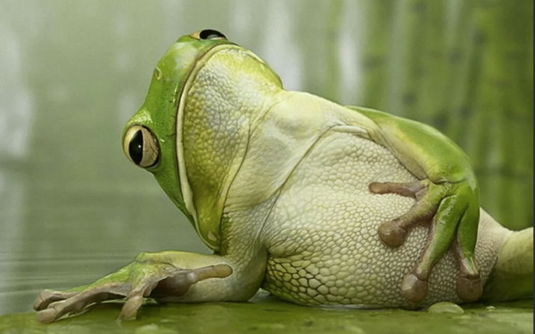Ленивая жаба: У меня пятница и выходные — я домой