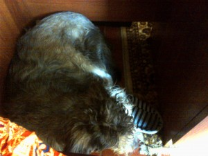 Coconut_sleeping_under_my_desk