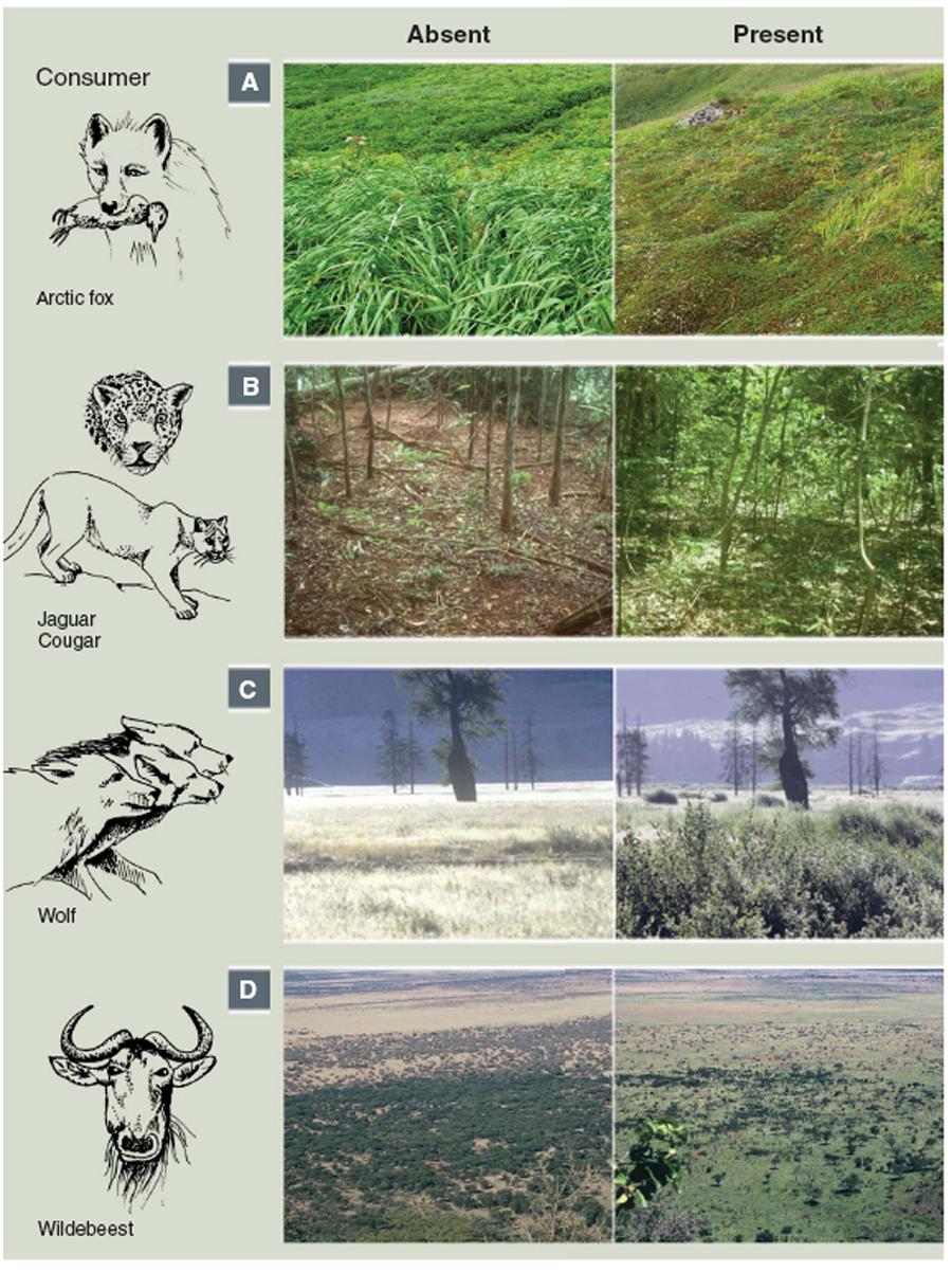Животные и ландшафты