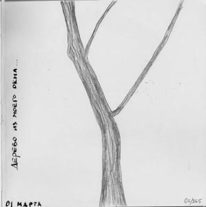 Дерево из окна