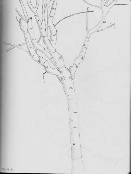 дерево турц