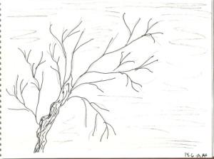 дерево 14 06