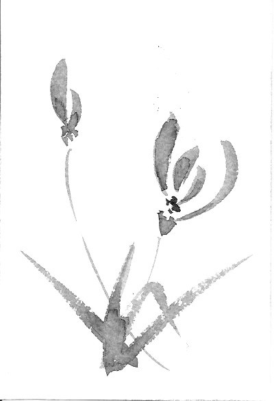 орхидеи две
