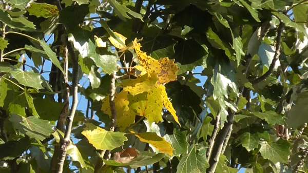 осень листва.png