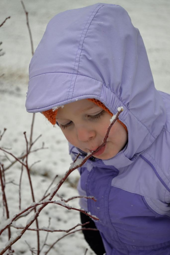 Blueberry Snow