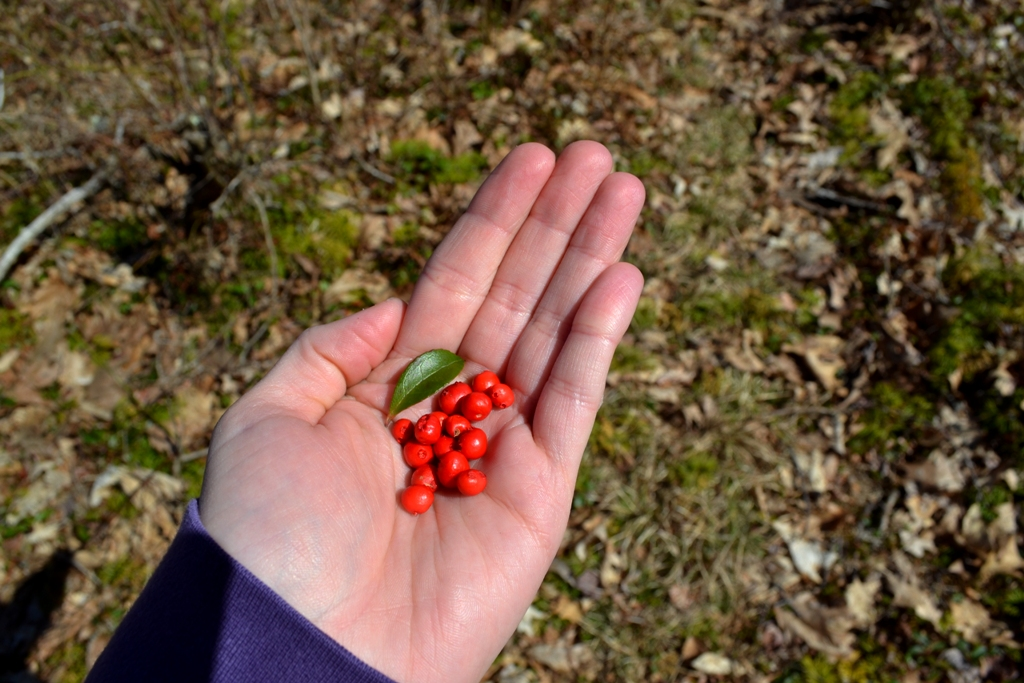 Partridge berries and teaberry leaf