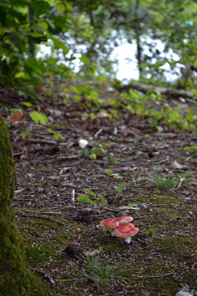 Mushrooms on the Island