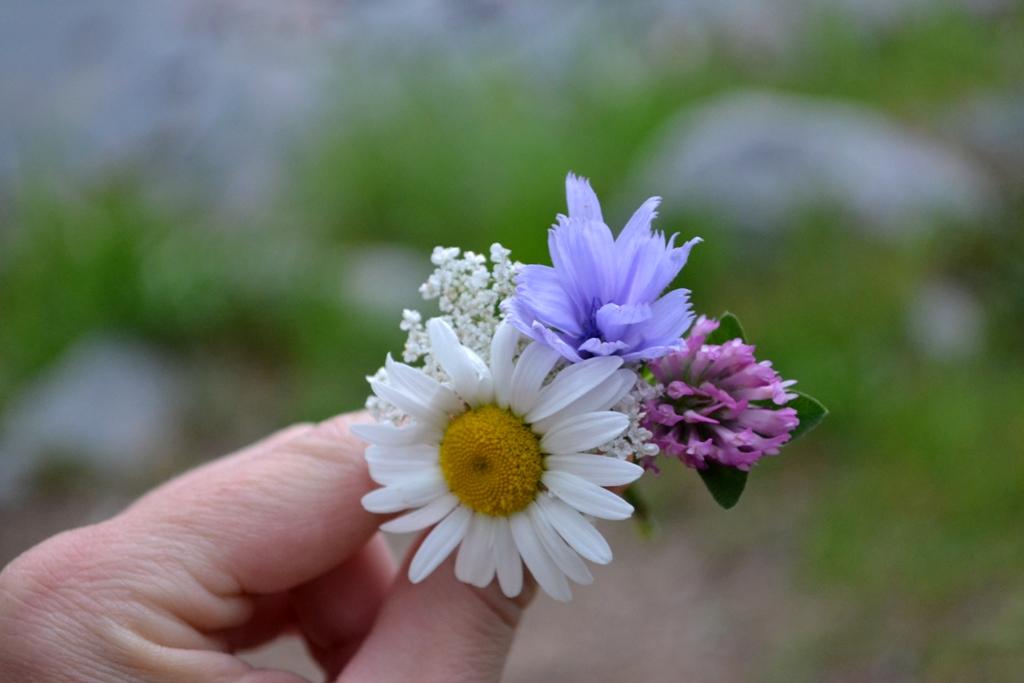 Late-Summer Bouquet
