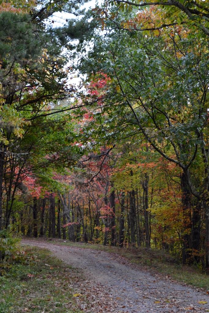 Pugh Mountain Road