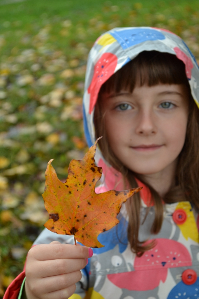Leaf Collecting 3