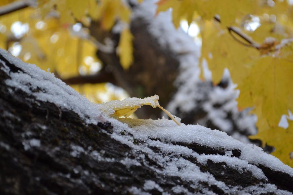 Snowy gold