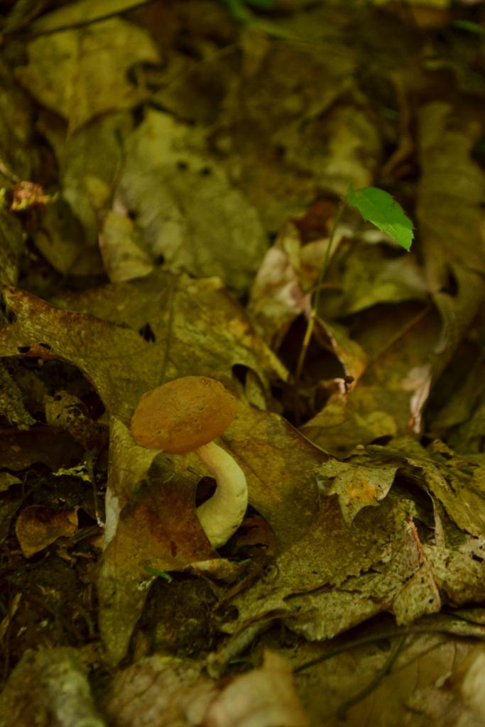 Curved Mushroom
