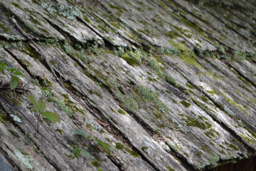 Mossy Roof