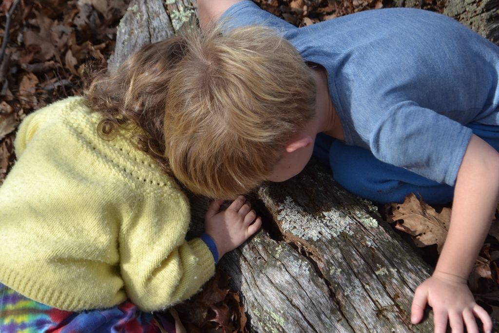Looking into the Log