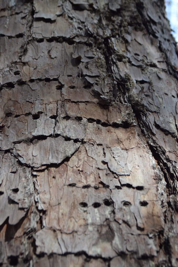 Holes in a Tree