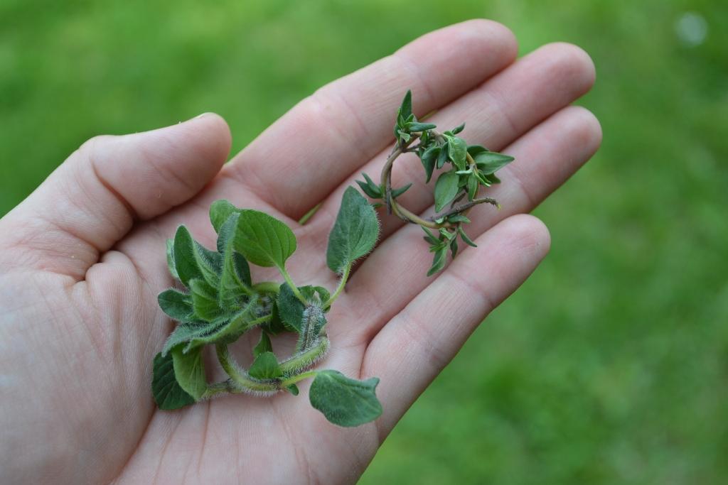 Herb Rings