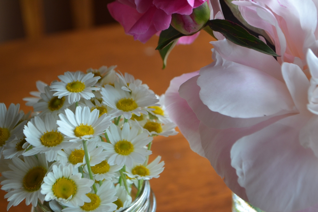 Daisies and Peonies