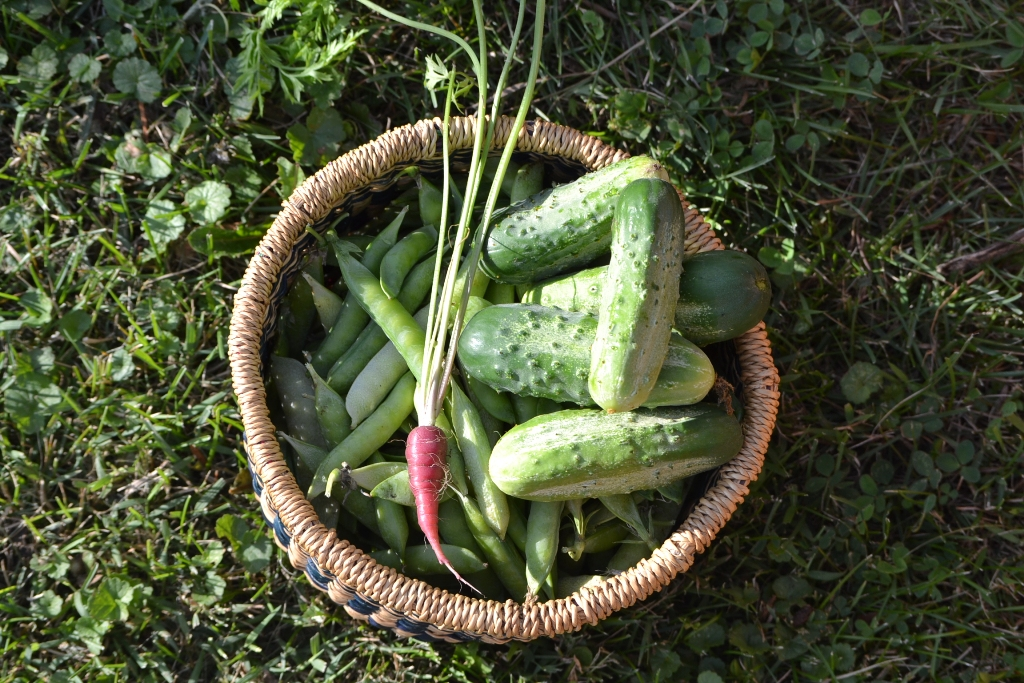 Peas, Cucumbers and a Carrot