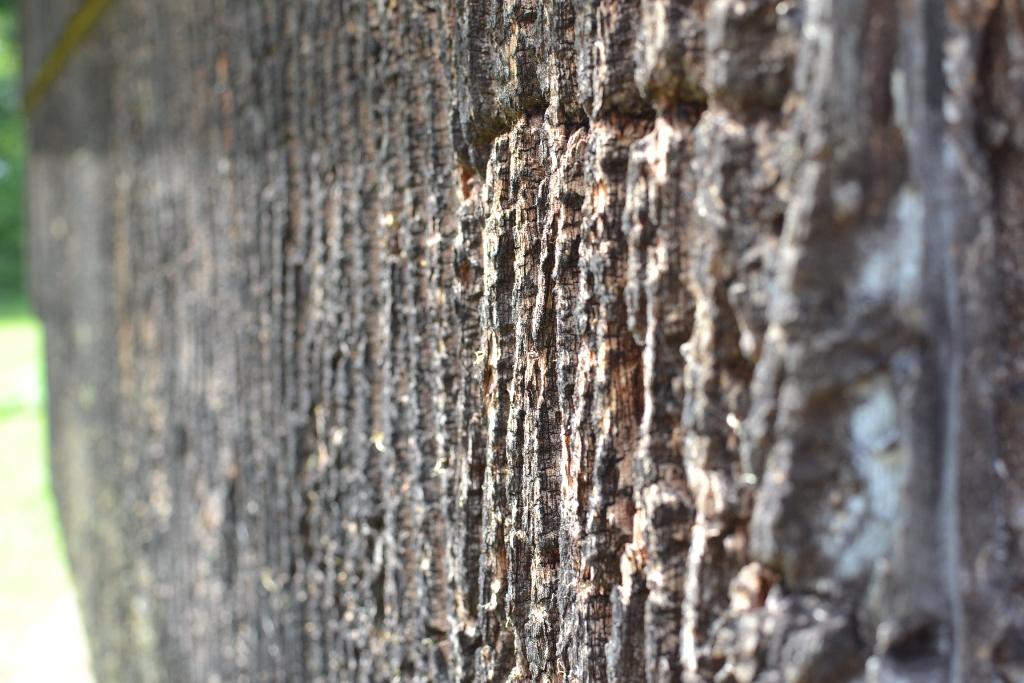 Bark Siding