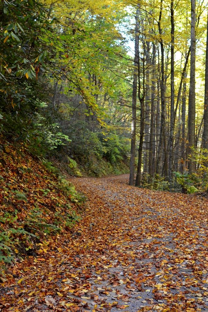Rowland Creek