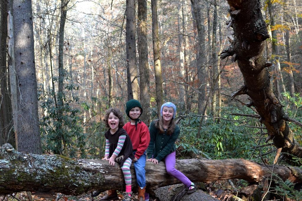 Trio on a Tree