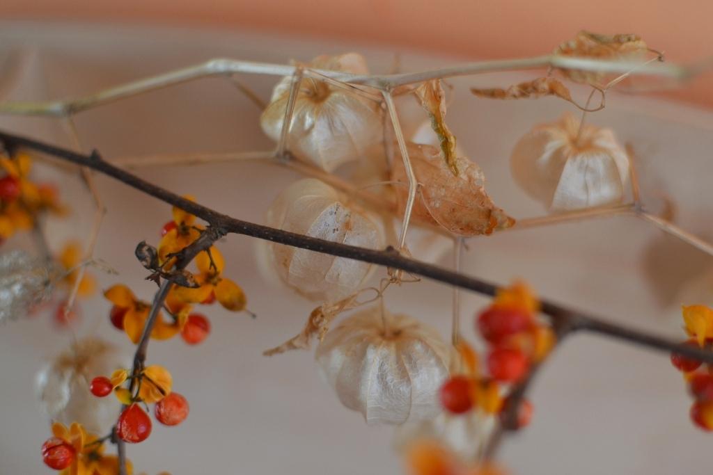 Bittersweet and Ground Cherries