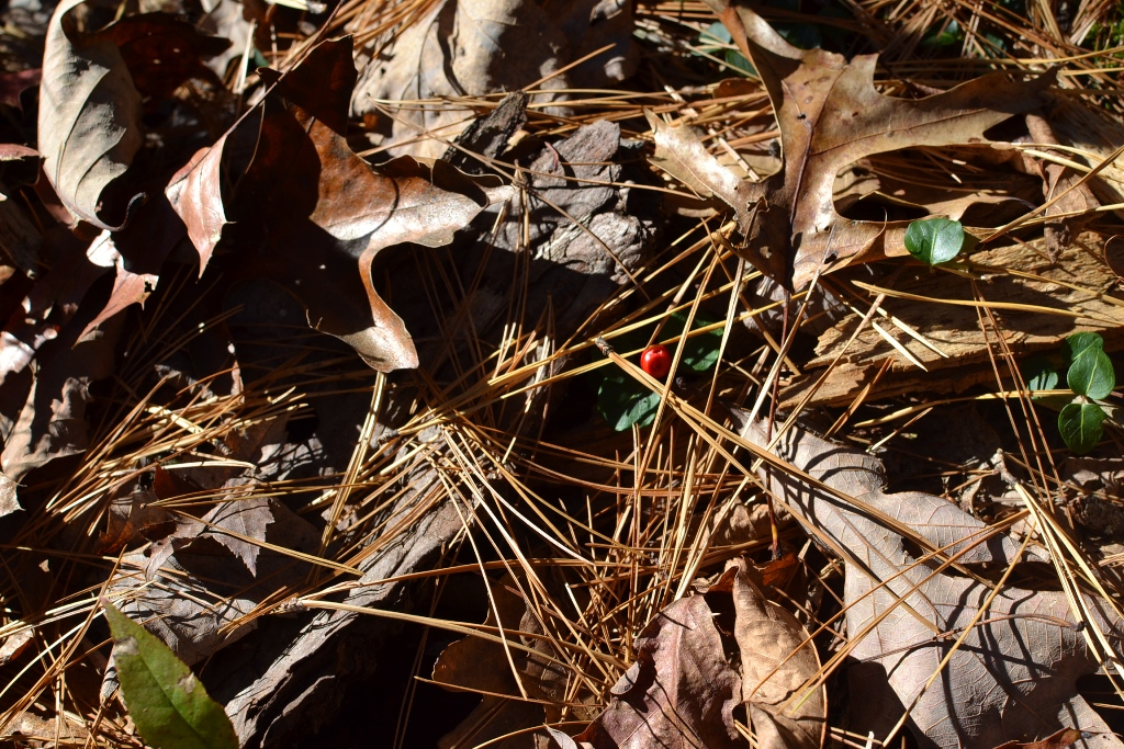 Partridge Berries