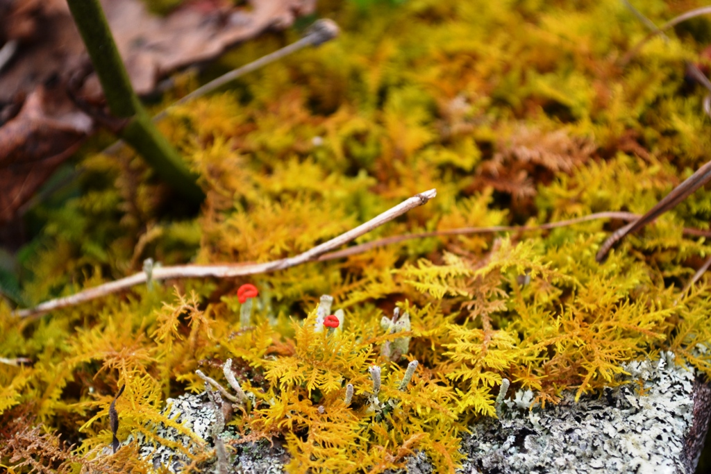 Tiny lichen