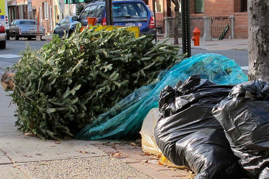 выброшенная елка фото большей частью недовольна