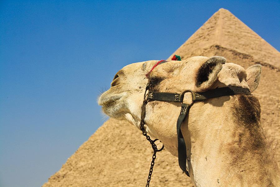 Как я покупала юбку в Египте
