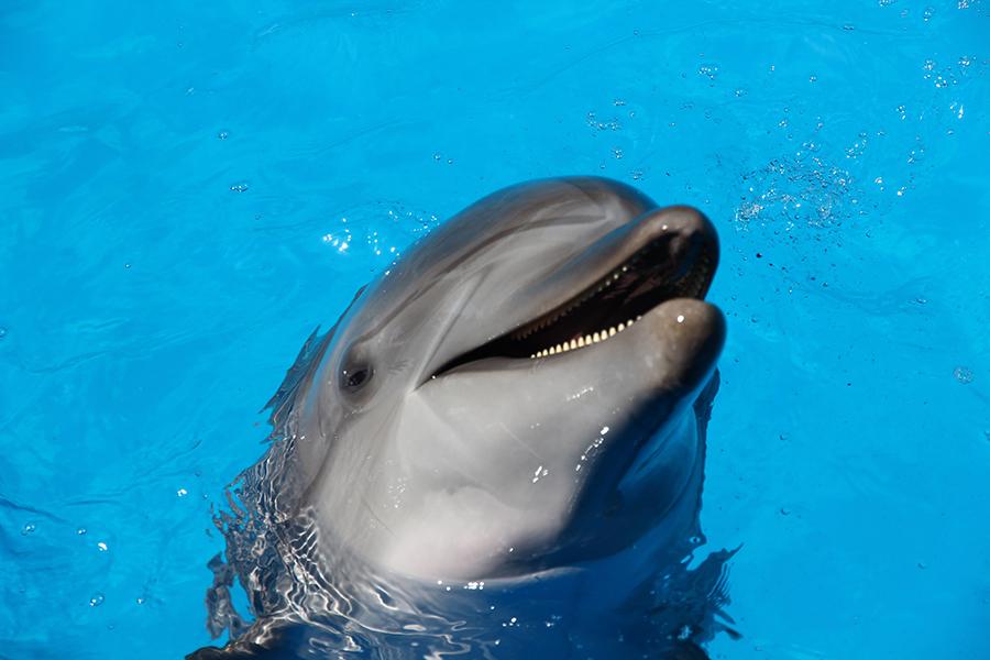 Опять кто-то хочет заработать на дельфинах и детях