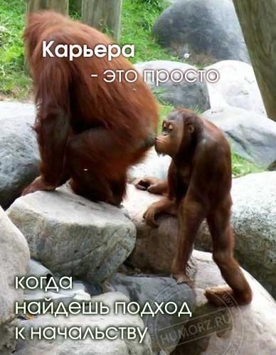 fisting-tolstoy-volosataya-pizda