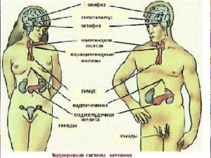 seksualnie-narusheniya-endokrinnaya-sistema