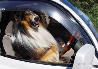 Я за правый руль!