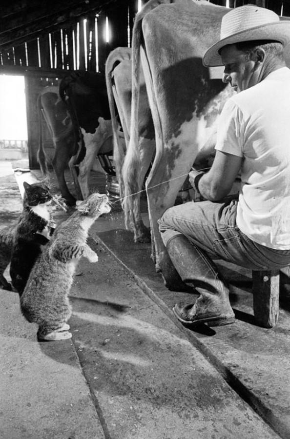 молоко-супер!