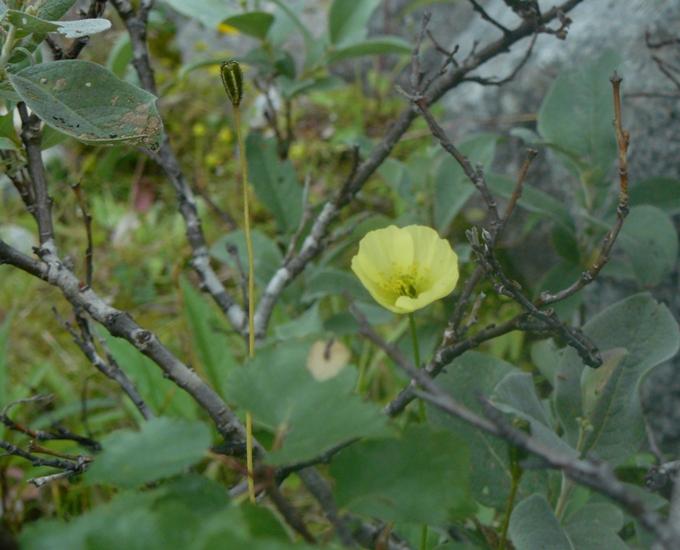 растительность 3