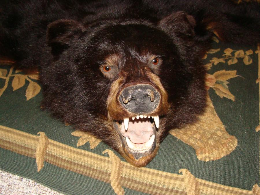 Bärenfell Kaufen