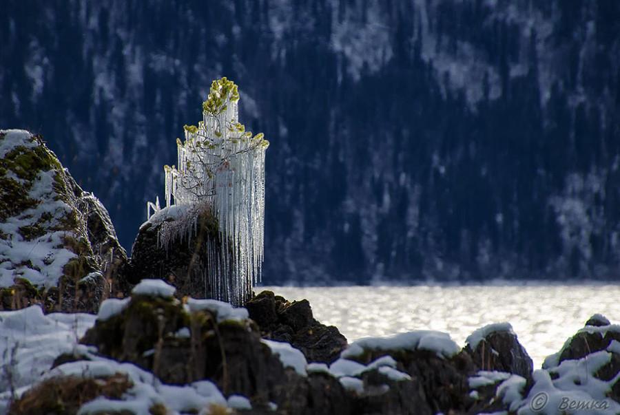 Замороженное дерево