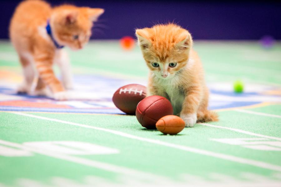 Kitten Bowl II