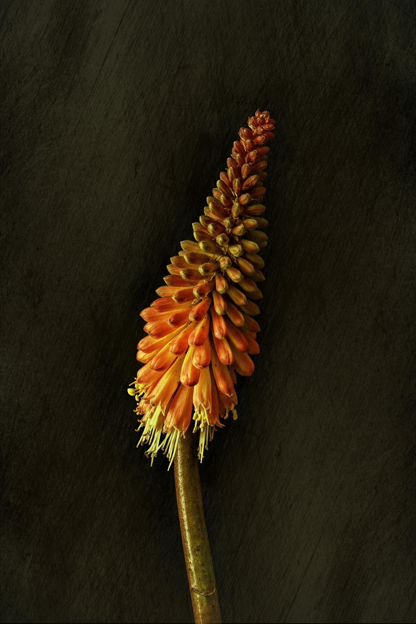Сентябрьские цветы / фото Bettina Güber
